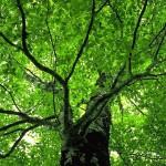 TREE_028